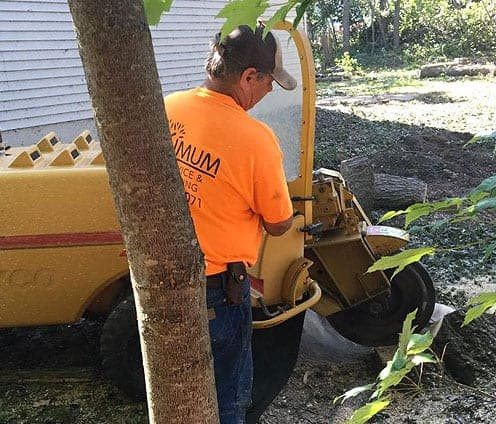 best tree removal services orono