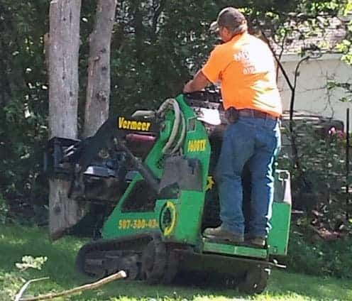 orono tree removal services