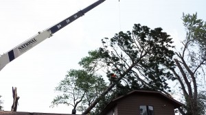 Tree Removal Business MN