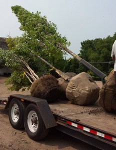 Tree Service Business MN