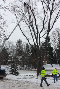 Tree Trimming Business MN