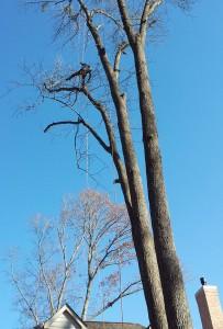 Tree Care MN