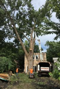 Tree Service MN