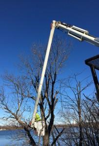 Tree Service Company MN