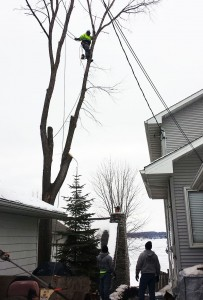 Tree Trimming Company MN