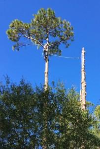 Tree Removal Company MN