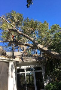 Tree Trimming Service MN
