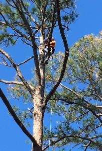 Tree Trimming MN