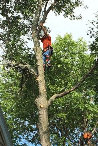 Tree Removal MN